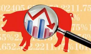 猪价出现回落现象 下旬后震荡风险将进一步提高