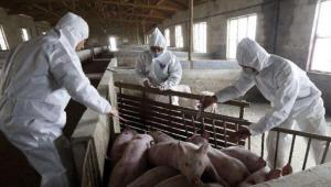 花了5万块给猪打疫苗,农民却损伤了几十