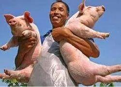 后悔现在才知道,只要做到这两点就可以在禁养区养猪!