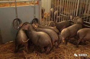 人民日报关注:拆了养猪场,生计咋保障