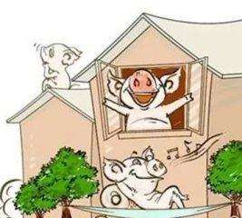 噪音对于猪伤害不小,赶紧看看吧!