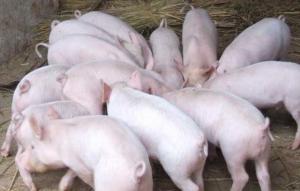 猪价连续下跌 安徽、河南等地出现回调,供应北降南增 结算价降幅缩小!