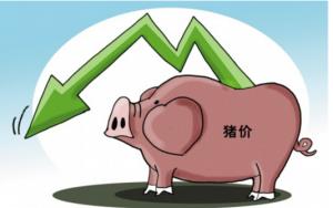 猪价跌势暂无改观,何时现转机?