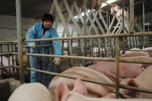 控制仔猪腹泻的唯一途径原来是:一个干净、干燥的产床