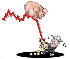 2018年农村养猪想赚钱,就要把握住这两点