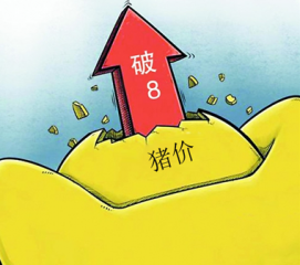 """春节前猪价有再度走高的可能性 但全面""""破8""""是难事"""