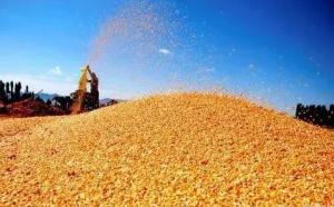 春节前后玉米价格上涨还是下跌?思前想后 还是下跌的可能性更大