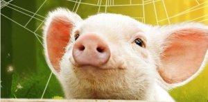2017年全国生猪出栏68