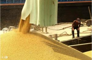 豆粕供应不断增加 短期仍以弱势震荡为主