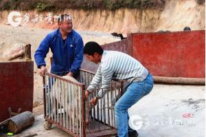 """贵州:脱贫故事 看看勤劳脱贫人刘廷金的""""经济账"""""""