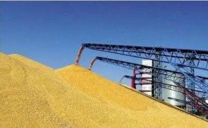 玉米等粮食政策性去库存情况良好,粮价要