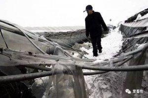 紧急!雨雪冰冻致江苏、湖北、重庆养殖场大面积塌毁,损失惨重