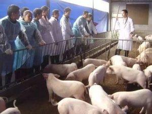 农村养猪人不容易,给养猪场取个名字居然