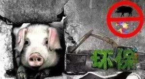 环保部孔源:征收养猪环保税须满足这两个条件,你属于吗?