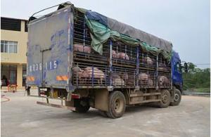 秀博科技努力打造扬翔优质养猪服务平台