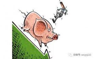 生猪日评:恐慌出栏 猪价跌势放大