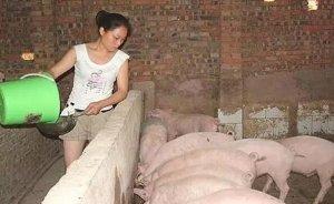 一位久经猪场的老兽医谈猪饲料,句句在理