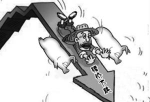春节前山东阳谷生猪价格持续下跌
