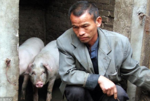 因为压栏,一个星期我损失了12万 请养猪户们引以为戒!