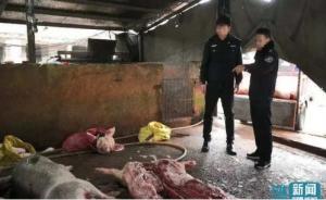 广东一私宰生猪窝点被端掉 6人被拘查扣生猪63头