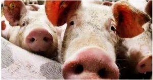 饲料行业的五大现状与五个大坑