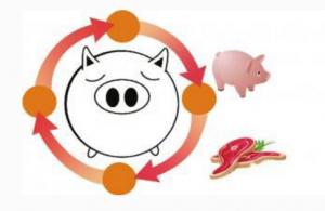 王中 �透视猪价的规律与变局(上)