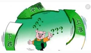王中 �透视猪价的规律与变局(中)