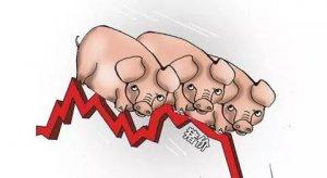 规模化养猪企业产能开始释放?