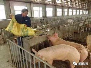 养猪想赚钱?这些方法降低成本!