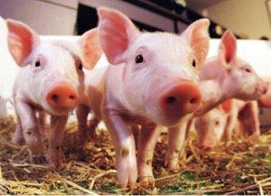 重庆市忠县50万头生猪产业项目第一个家庭农场开工