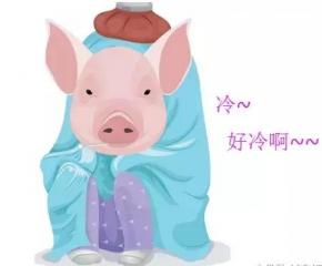 """猪出现""""低温""""的4大原因分析,及其应对策略"""