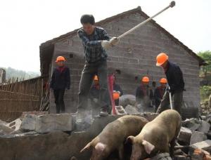 这两个省提出将重新调整完善禁养区划定,养猪场原则上不再关停