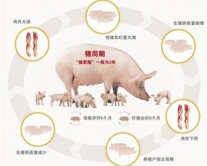 """发展生猪期货 化解""""猪周期""""风险"""