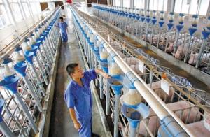 望奎:将新增年出栏3000头以上生猪规模养殖场30个