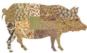 老刘养猪培训 猪的特性――利用猪的杂食性特点提高养猪效益