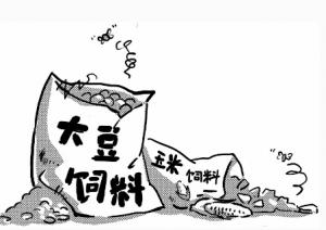 饲料原料集体涨价苦了养殖户