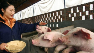 猪舍设备应该具备的硬性条件都有哪些?
