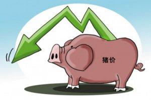 河北省生猪价格50天内每公斤平均降了3.27元