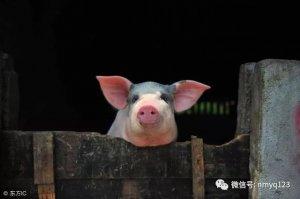 生猪日评:需求低迷 猪价或止跌但上涨也难