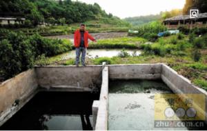 重庆一养殖场直排粪污被罚10万,还得赔81万