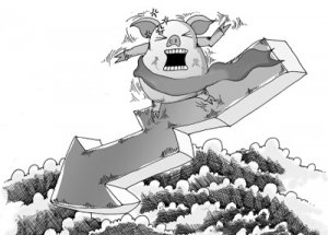 芜湖:猪价一跌再跌 达三年来低谷