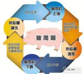 环保加严,已经持续了35个月的猪周期将被继续拉长