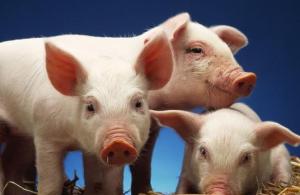 猪价会不会跌回2014年