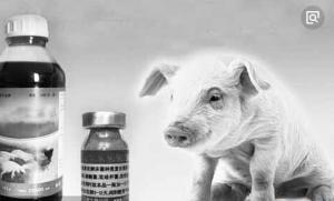 深圳文锦渡口岸:截获法国猪疫苗