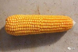 玉米价格再次上涨,一涨再涨为什么?2018