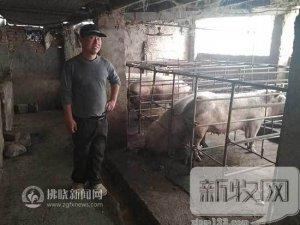 """贫困户苏文科发""""猪""""财"""