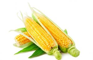 临储拍卖启动前玉米价格震荡趋弱