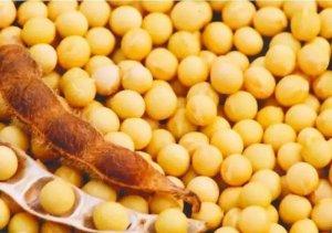 进口肉会减少?多个国家想扩大对华猪肉、大豆出口!