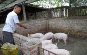 猪价底部震荡 是否迎来反弹?