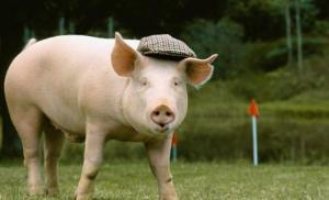 猪价目前反弹乏力,刺激性上涨待何时?